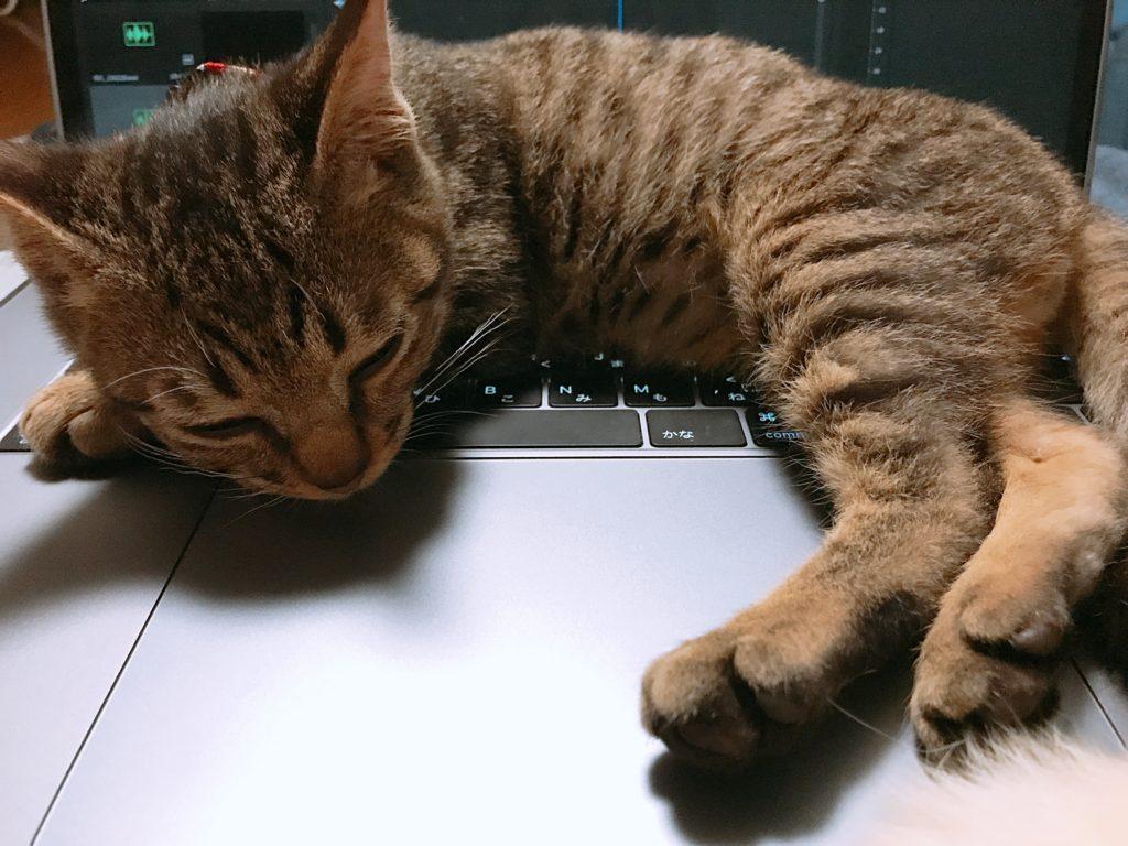 猫はあったかいのが好きな話
